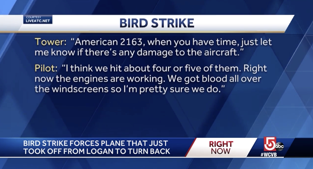 bird strike damage